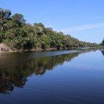 Amazônia: O que fazer