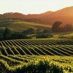 As vinícolas de Napa Valley