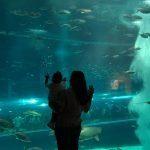 AquaRio – Aquário Marinho do Rio
