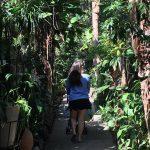 Um passeio pela Ilha da Gigóia