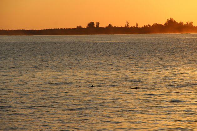golfinhos maldivas